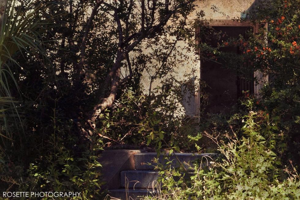 Rosette Photography - SavannahGA1